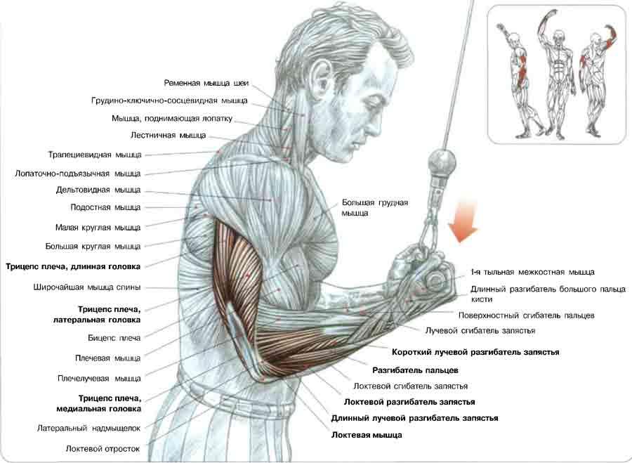 Фото упражнения для рук