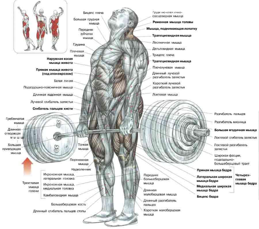 Механика выполнения упражнения