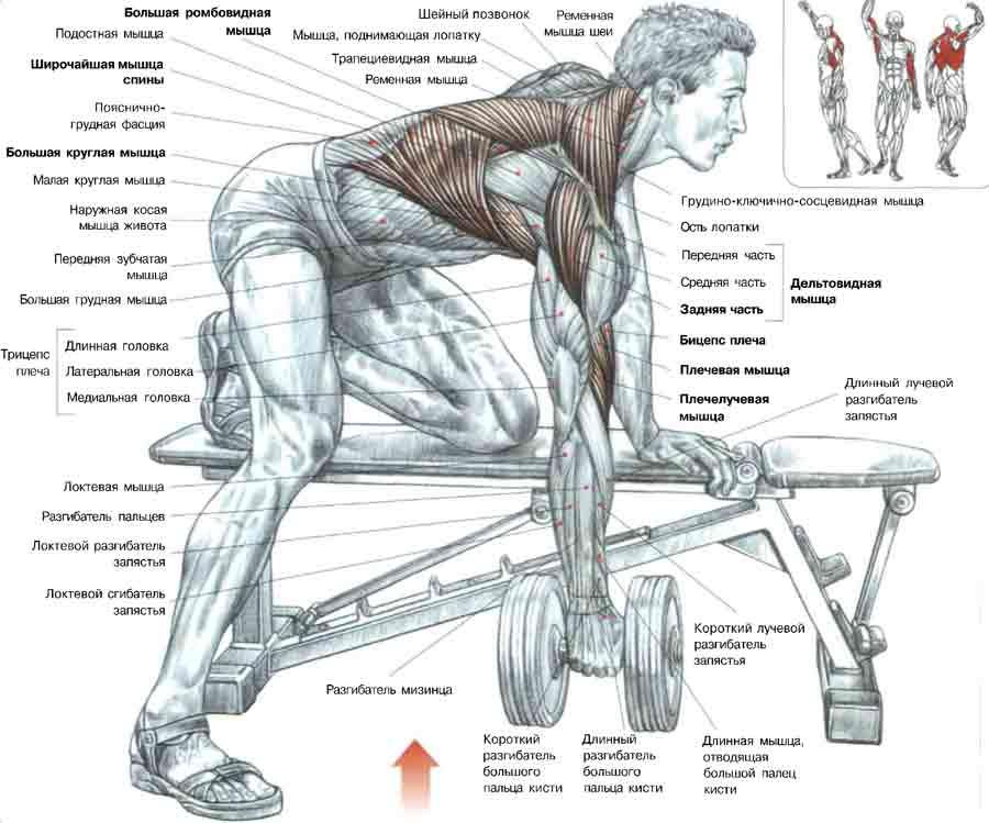 Упражнение тяги гантели одгой