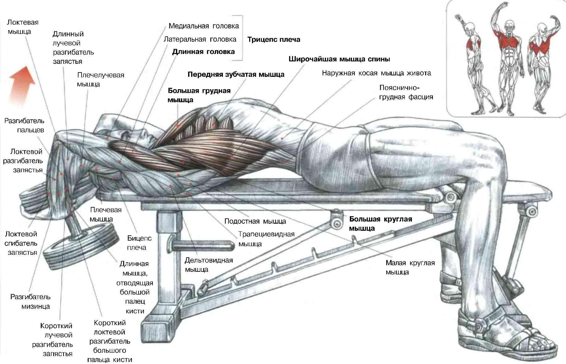 Как натренировать мышцы в домашних условиях