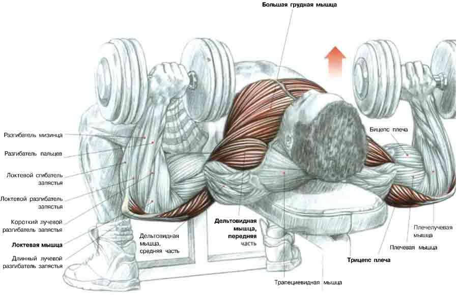 Механика выполенини упражнения